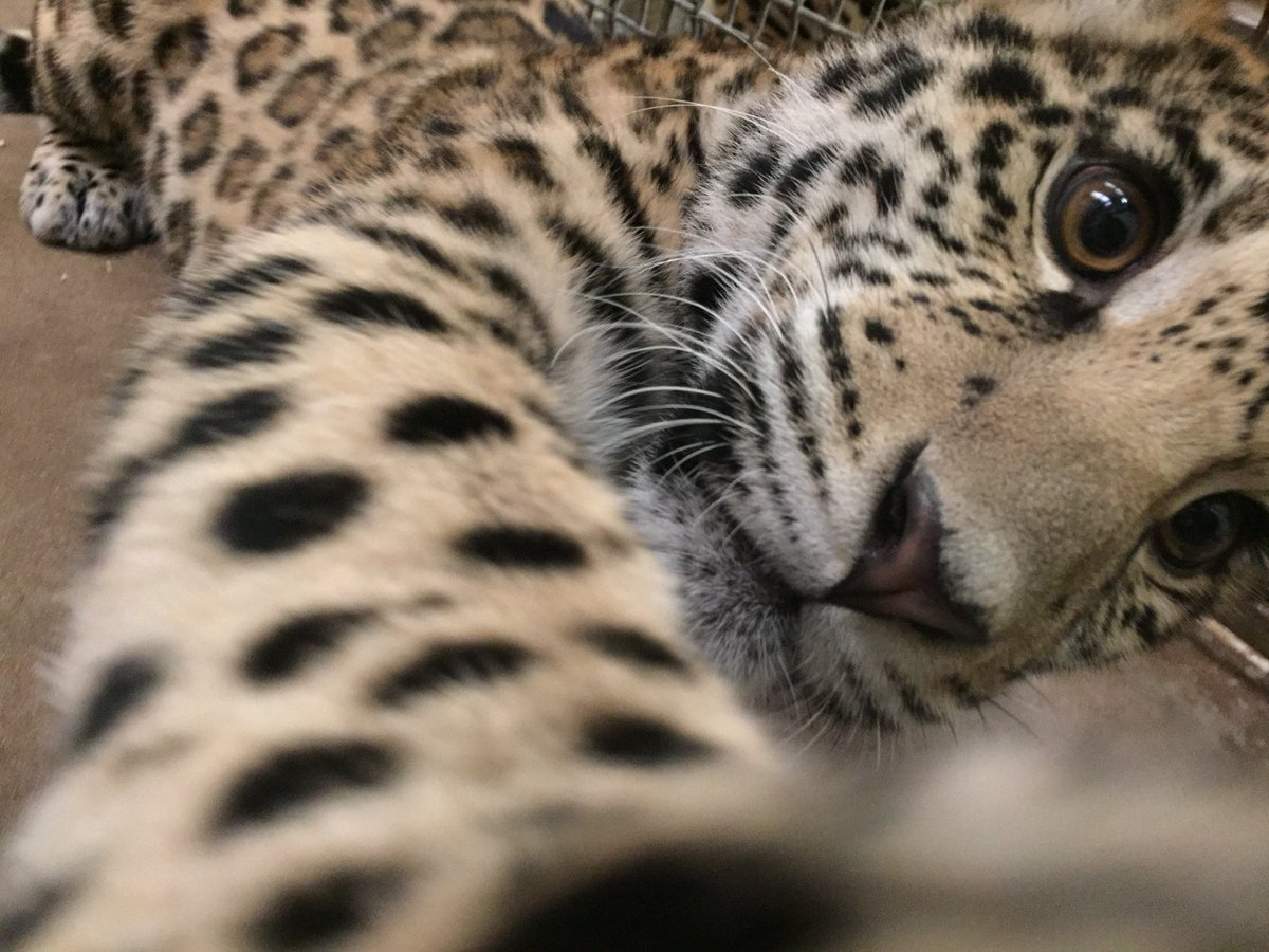 Tulsa Zoo on Twitter: