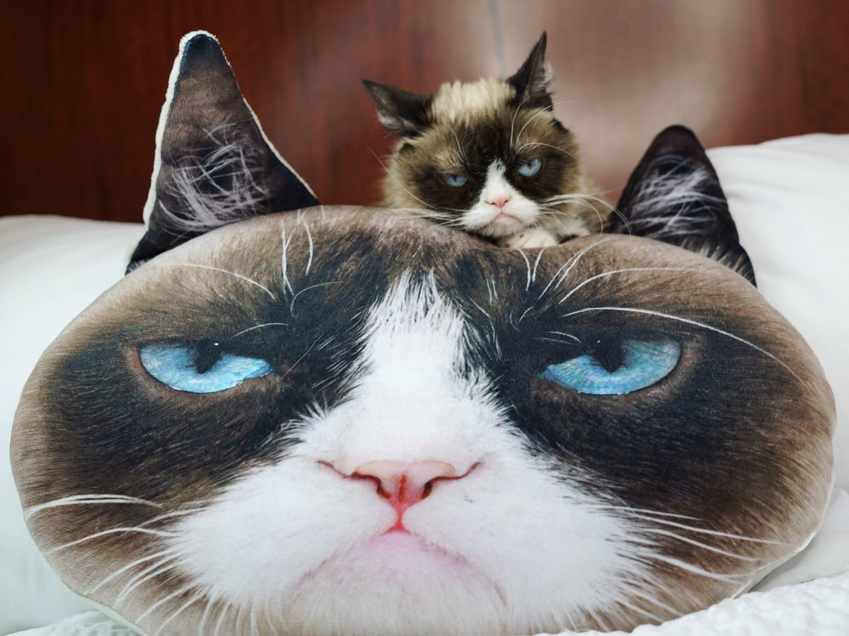 how to buy a grumpy cat