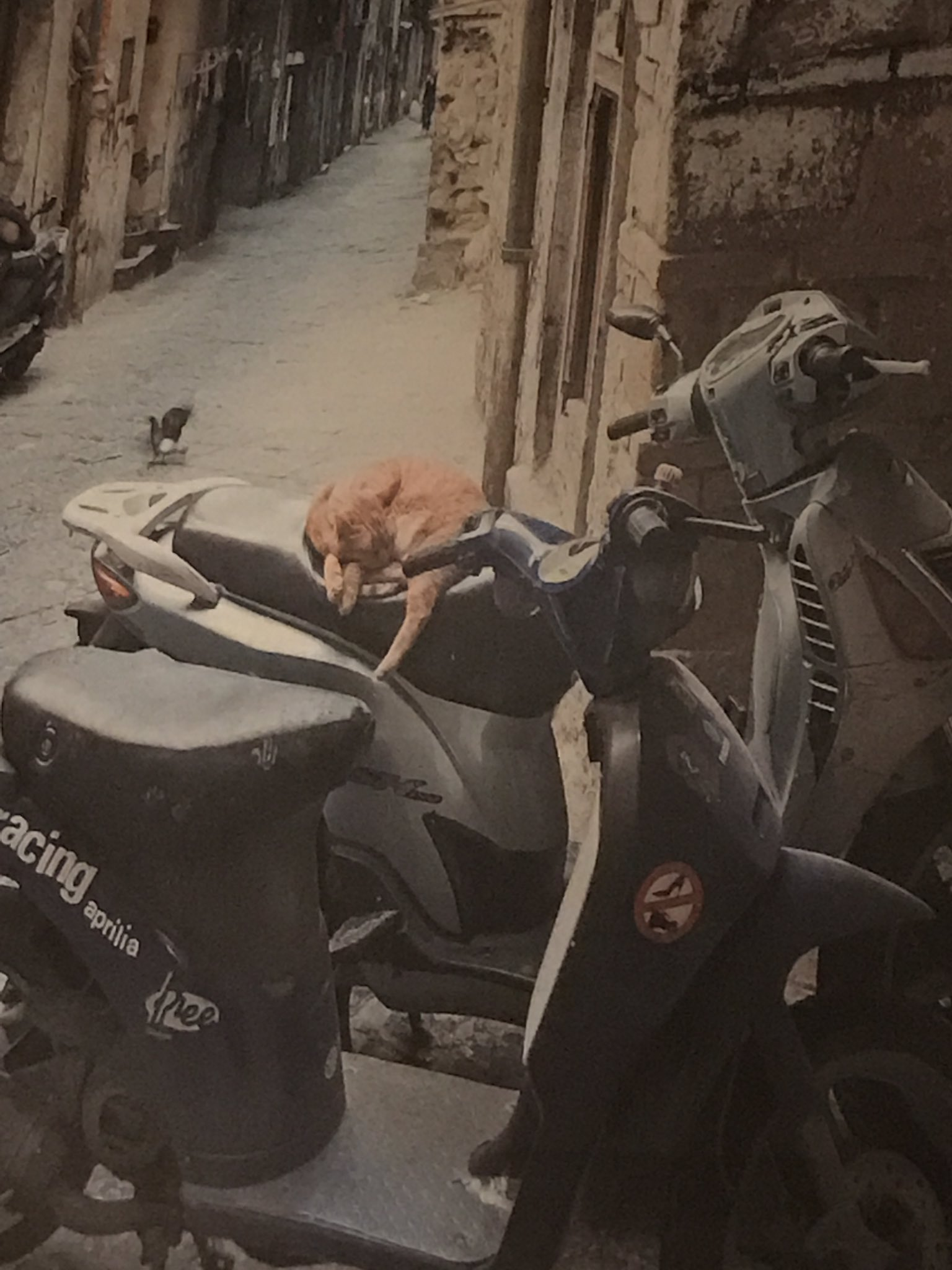 In Pizzaria Vetri and saw this picture on the wall and wondered if the cat was just resting up for the game tmrw night #rtc https://t.co/5KcQ7TbmL8