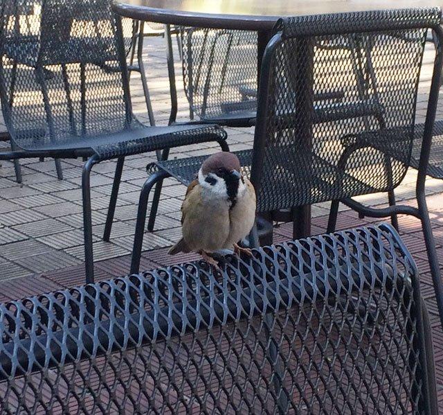上野動物園内で昼食時に近づいてきた野生動物