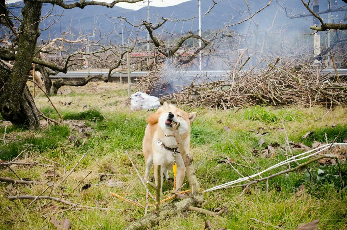 犬も自分キマってんなって判断したら目線くれます pic.twitter.com/ZRMjCv3cwy