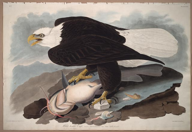 Today in History: John James Audubon - These primary sources really soar! https://t.co/PrR3dxGEtc #tlchat #sschat #scichat #elemchat #edchat https://t.co/CZoQr5gFeG