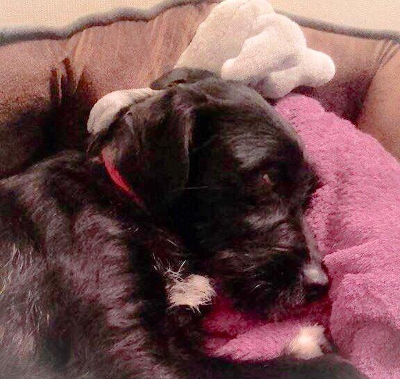 Zante Dog Rescue Uk