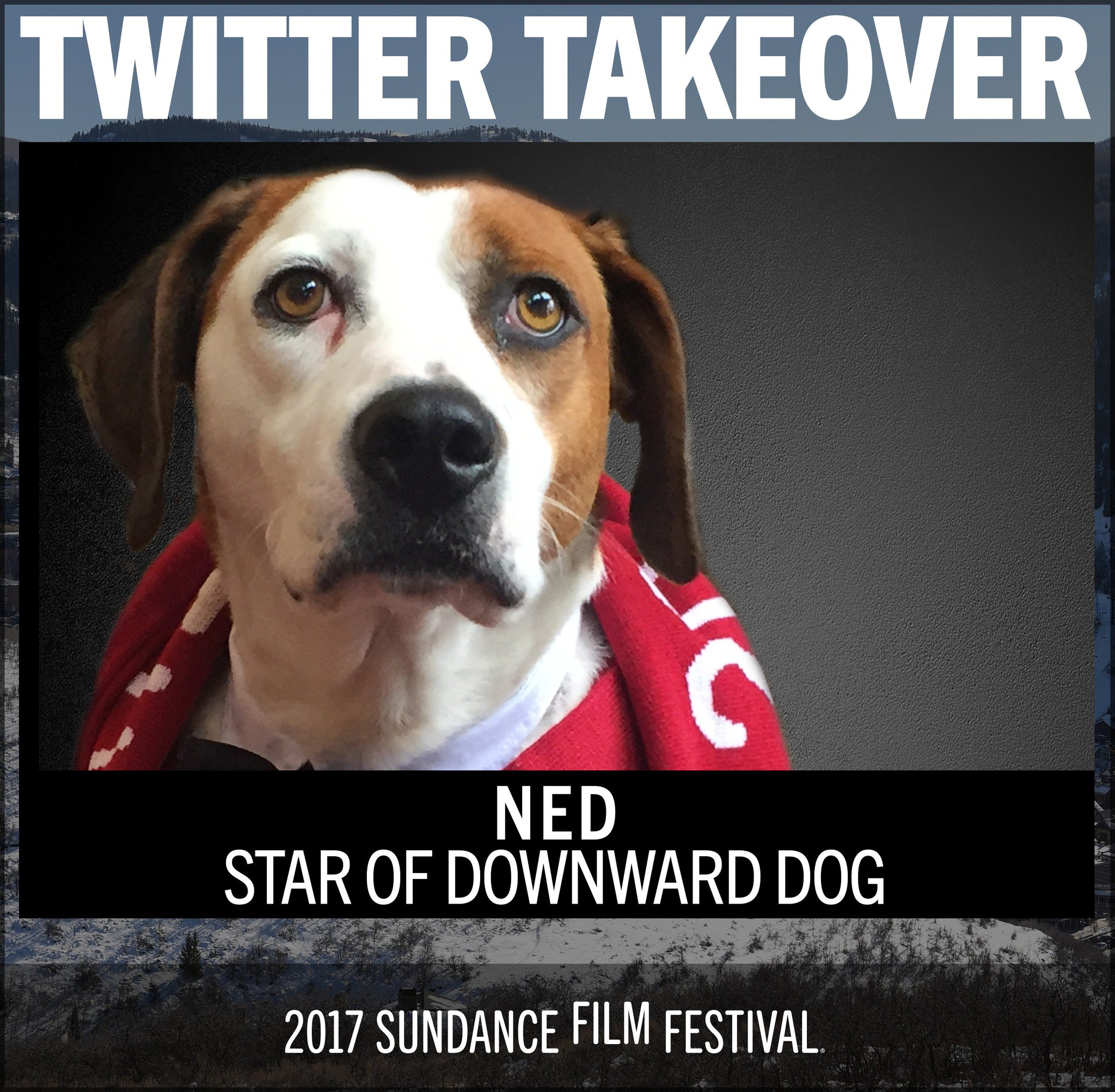 "Thumbnail for Sundance 2017: Twitter Takeover - Ned, star of ""Downward Dog"""