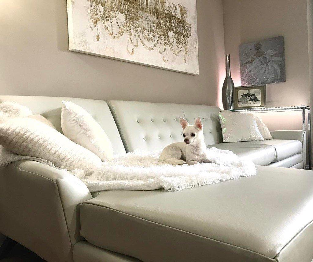 Pet Friendly Leather Sofa Pet Friendly Leather Couches