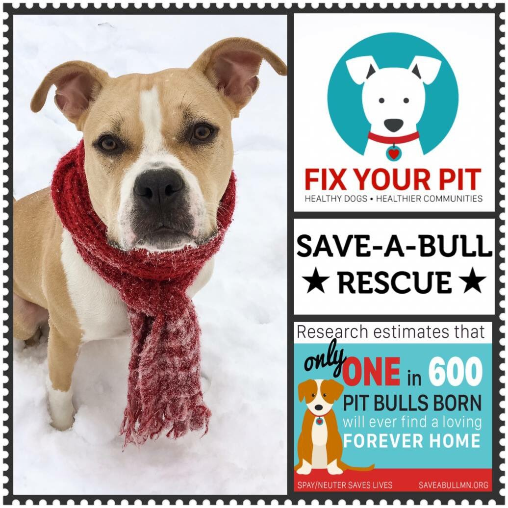 Save-a-Bull MN on Twitter: