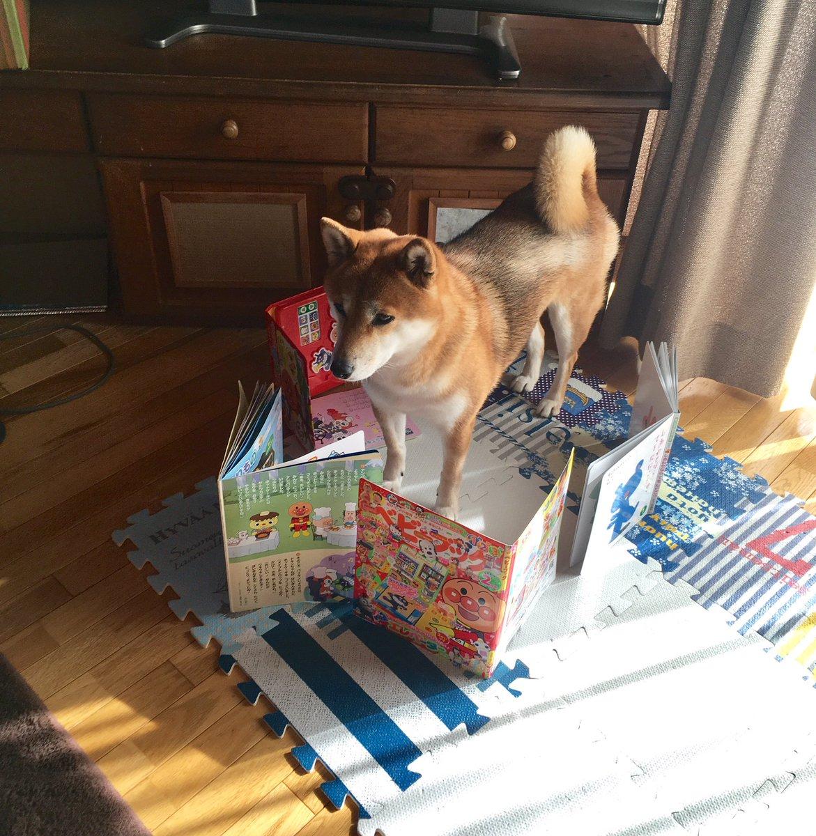 甥っ子に封印された犬 pic.twitter.com/YZATzpOFT5