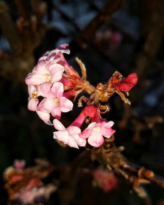 January Flowers  #photo #photography #yyj #JamesBay #flowers https://t.co/XxlgRaNlNa