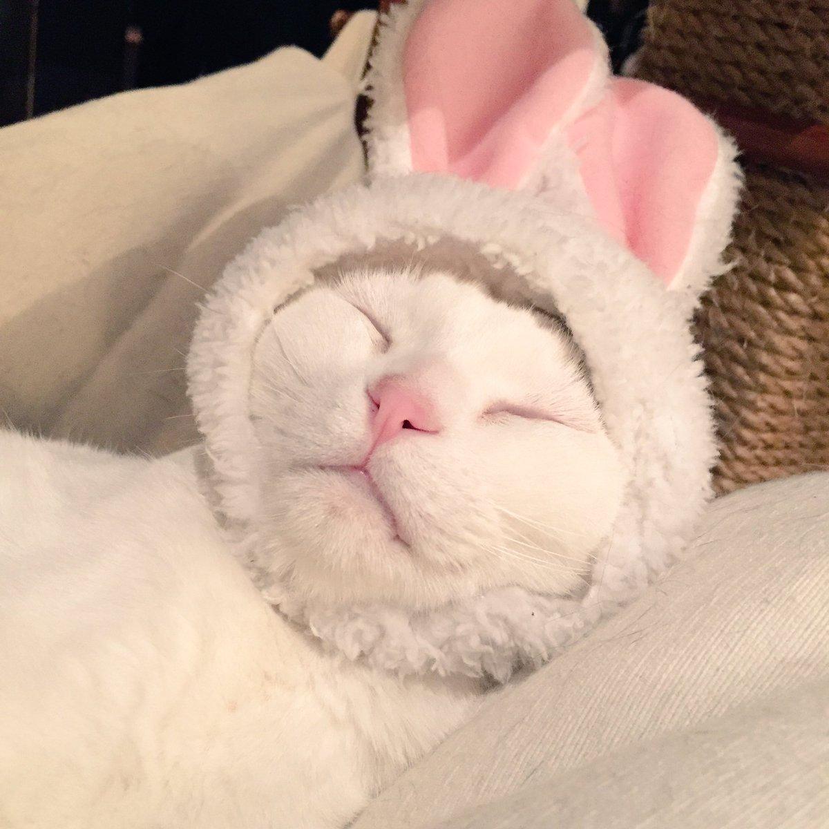 豆もち…。もう、ウサギが馴染みすぎて猫に思えない。