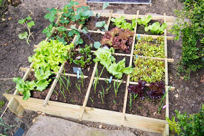 How to Transform Your Garden into a Food Forest