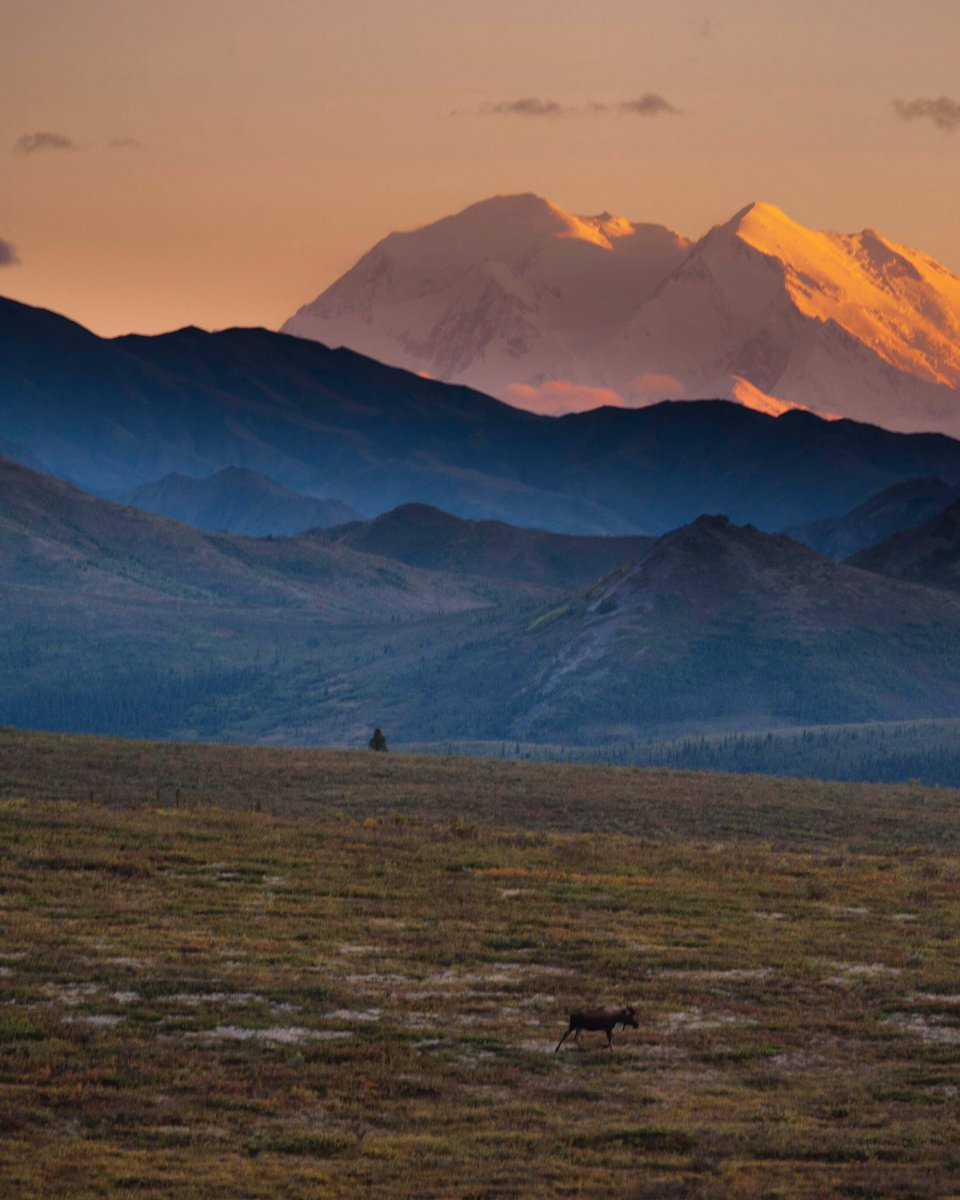 There aren't enough words to describe the beauty @DenaliNPS in #Alaska