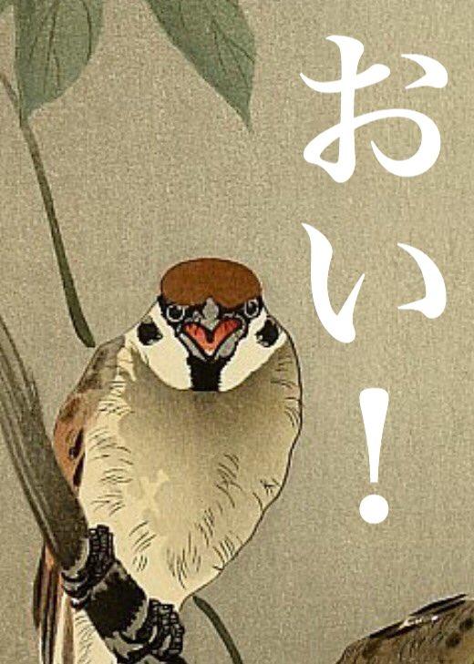 最近は雀がこっちに向かって怒っているようにしか見えません。  #小原古邨