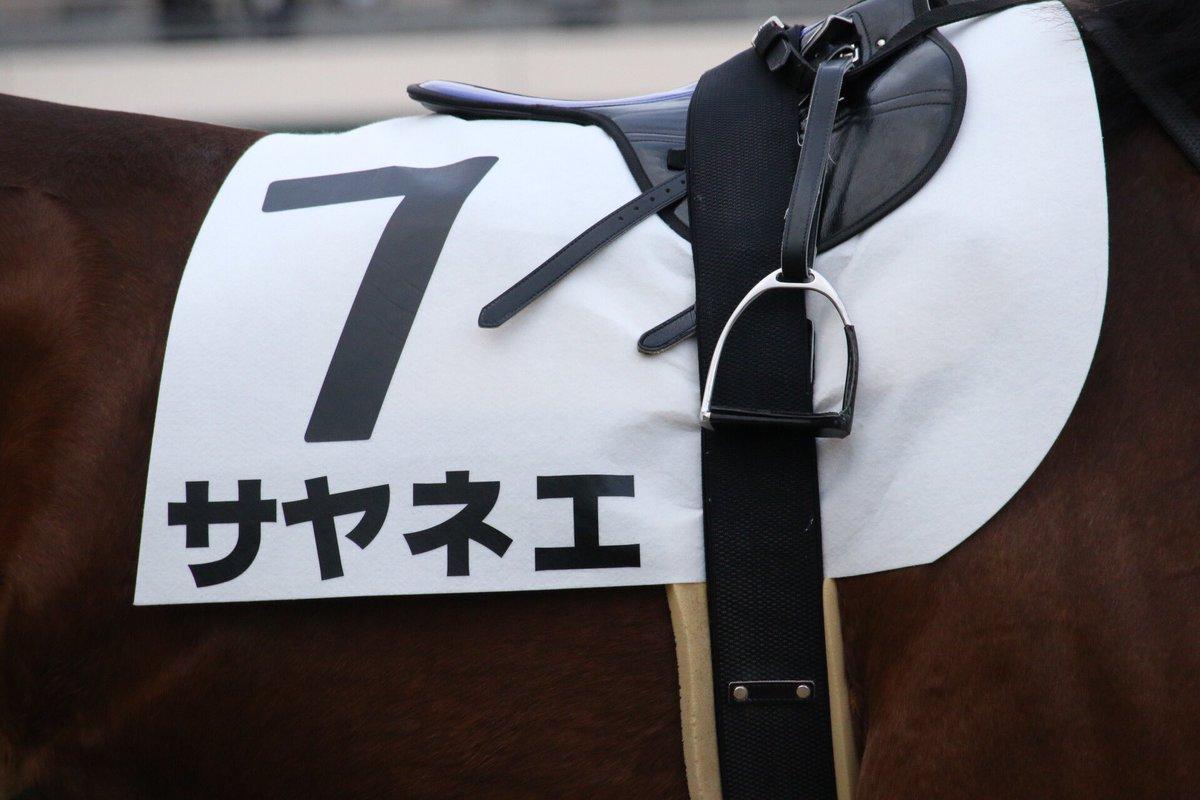 2017.1.29 東京2R サヤネエ(Sayanee) 藤田菜七子騎手  噂のサヤネエ、デビューで…