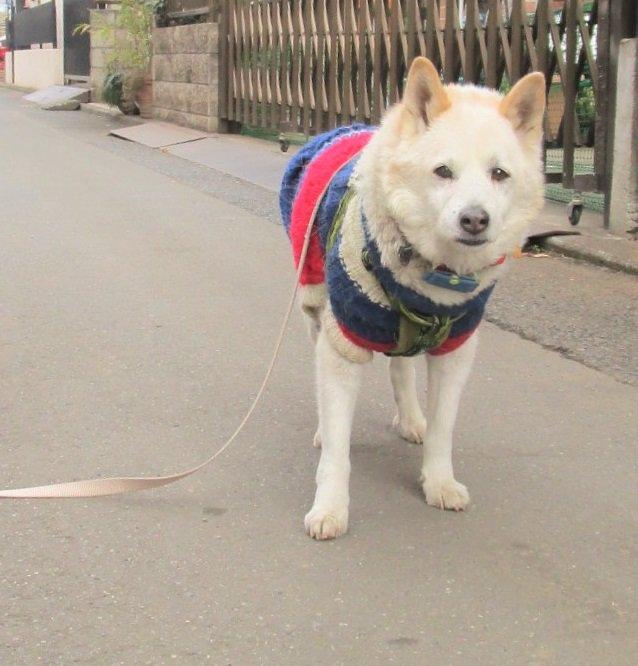 飼い主において行かれた犬の悲しげな表情がこちらwww