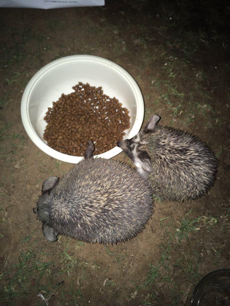 ネコ飯を食べにおいでの2タワシ様。