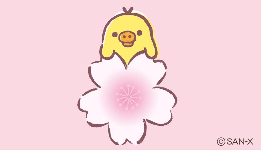 0がつく日はキイロイトリTwitter♪  キイロイトリも桜でほっこり?