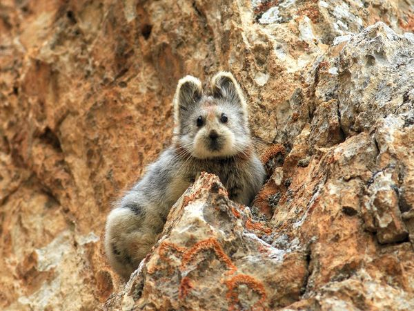 China's endangered 'magic rabbit' was photographed for the first time in 20 years: https://t.co/4pSbtjNPae https://t.co/3sVQzVzmzl