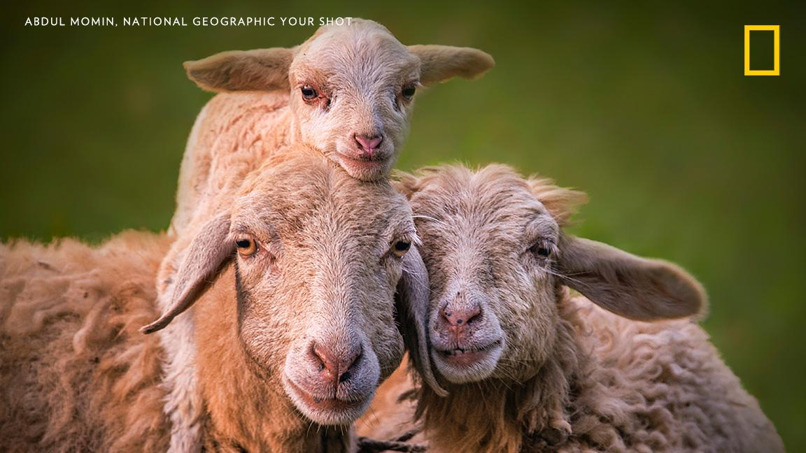 Help Us Caption This Photo By YourShot Photographer Abdul Momin