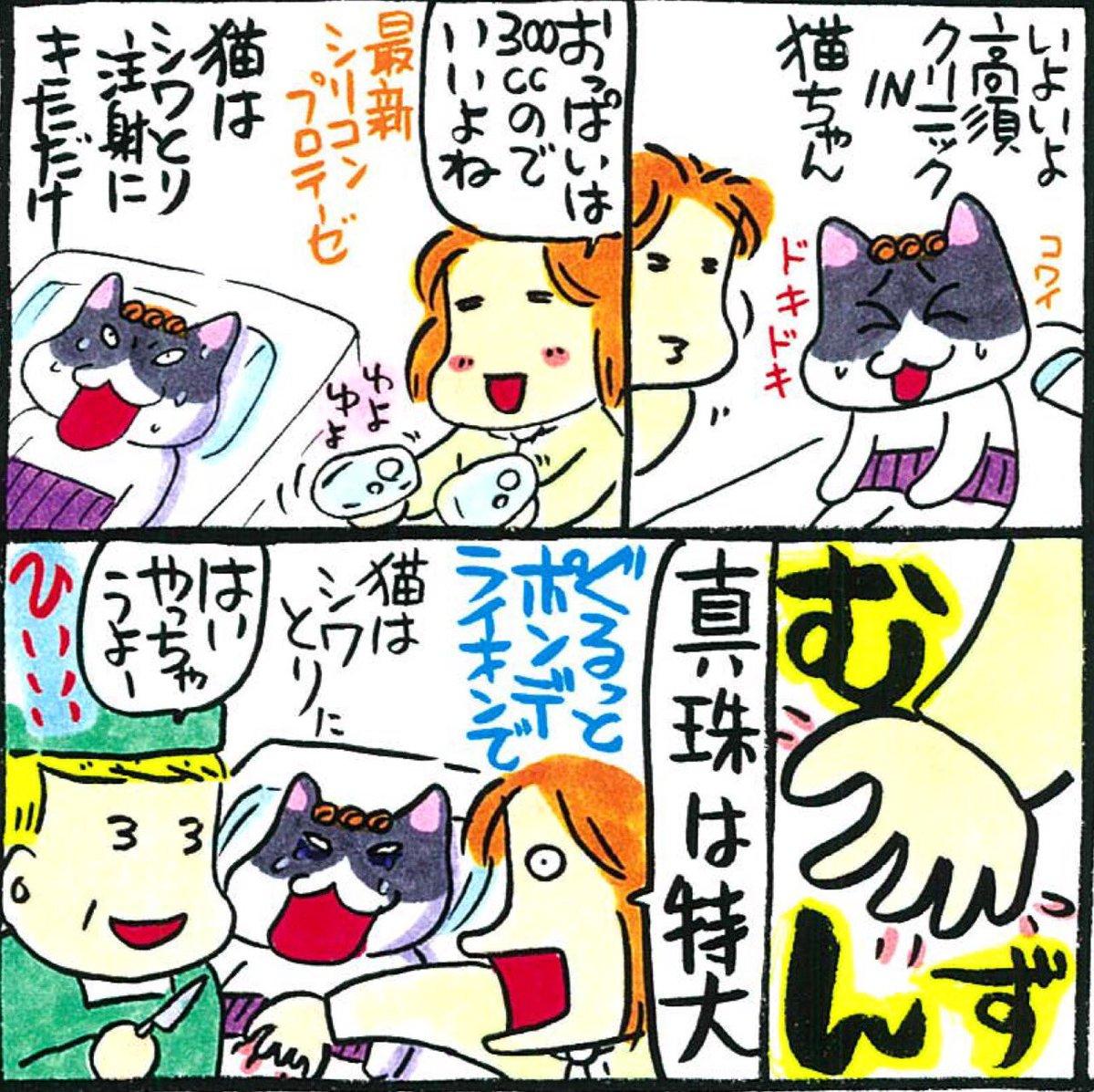 猫 組長 ツイッター