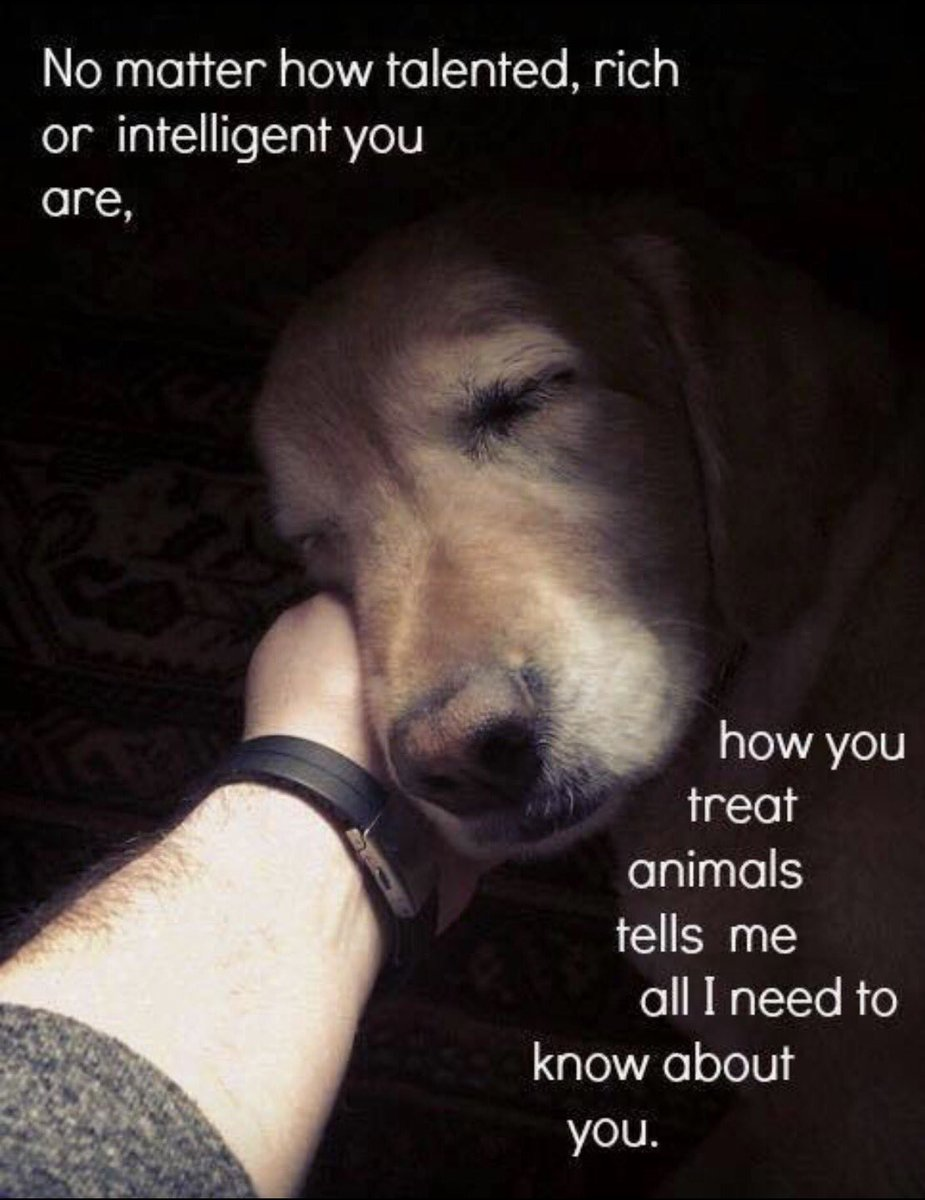 Hate people that are cruel to animals https://t.co/3z646TpbxM