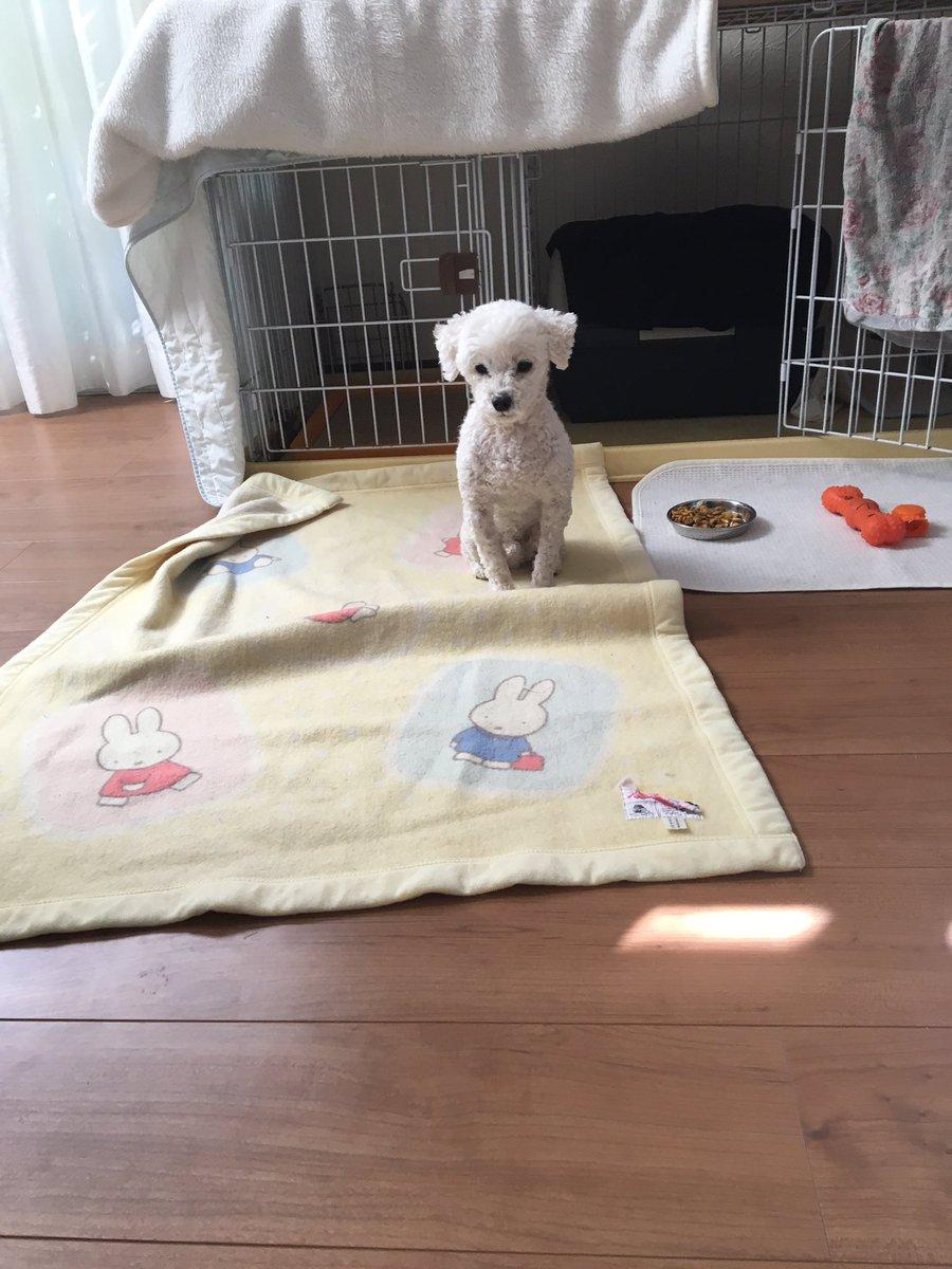 犬「いや、出かけるのとかは全然寂しくないんですけど床暖房をつけてから行っていただけないでしょうか。」…バタン!(ドアの閉まる音)犬「ザコが。」 pic.twitter.com/WU1yLzI6Bz