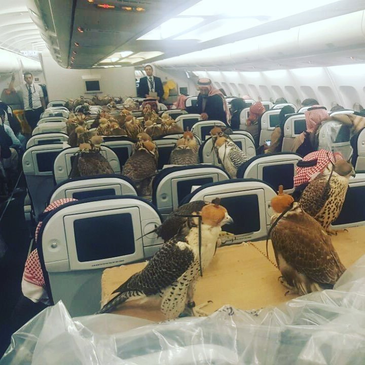 This Saudi prince bought tickets for his 80 hawks! https://t.co/M0gEnULgev https://t.co/LaM5N8xTT9