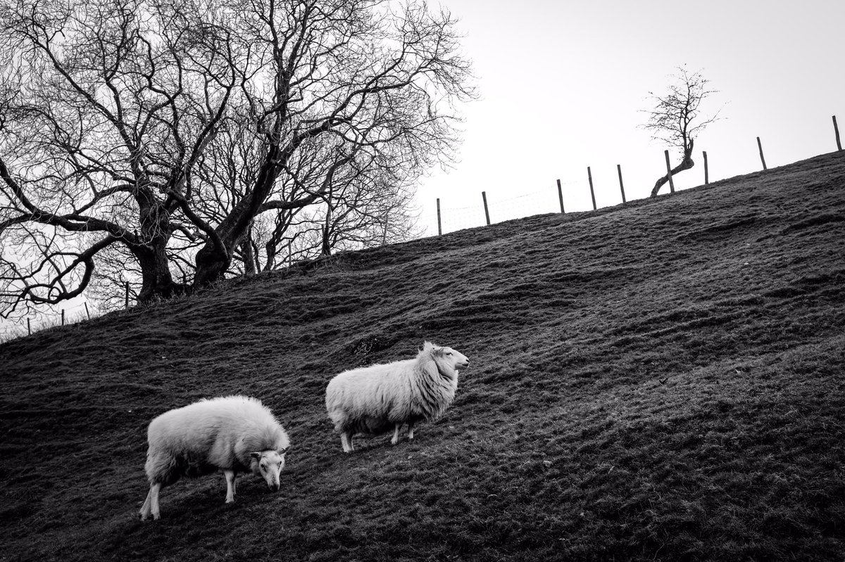 This great little moment captured by @LukeSmithhh makes it onto the #WexMondays shortlist https://t.co/LC4350qcQ3