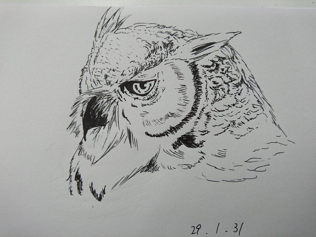 """まろやかん@入院ちう on twitter: """"豹と梟。 ボールペン一発描き!の拾い"""
