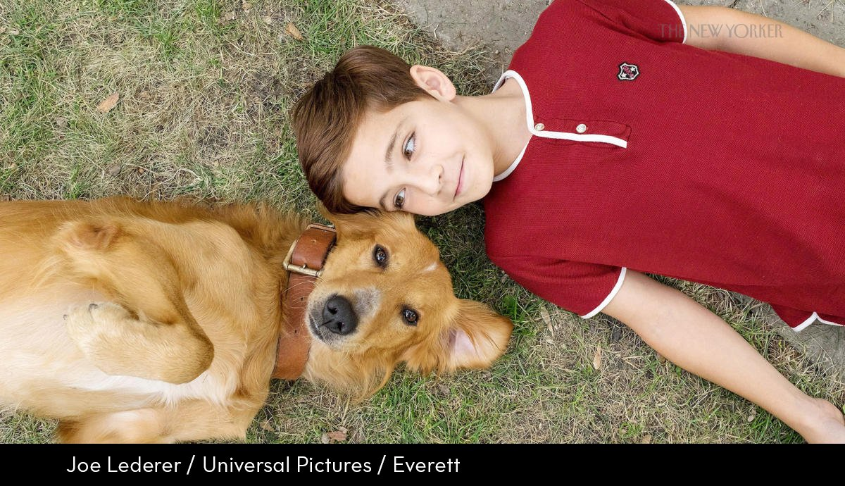 the new yorker on twitter in a dog s purpose it s a unique