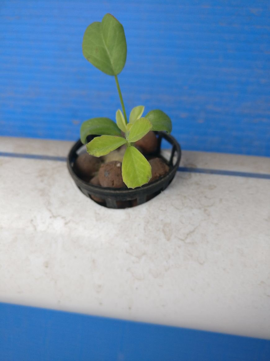 ar arjun arjun1904 s twitter profile twicopy verticalfarming growing what i eat chennai bangalore food startup