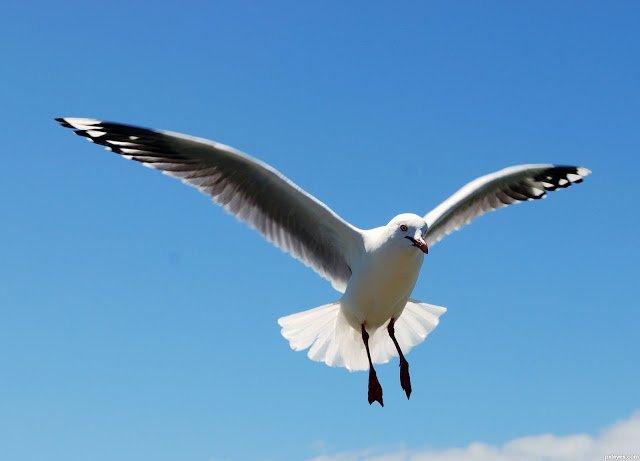 Fui assaltada por uma gaivota!!  http:// palavrasdoabismo.blogspot.pt/2017/02/fui-as saltada-por-uma-gaivota.html &nbsp; …  #roubo #assalto #crime #aves #gaivota #pássaros #comida<br>http://pic.twitter.com/rf46TJuWQj