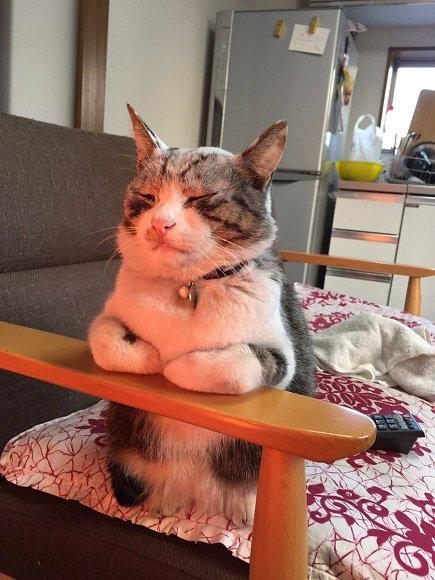 ストーブは……いいぞ……  ストーブにあたりながら寝る猫さん あまりの気持ちよさに仙人みたいな表情に…