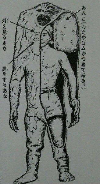 嘘だこんなの嘘だ!オイラの知ってる解剖図と違う!