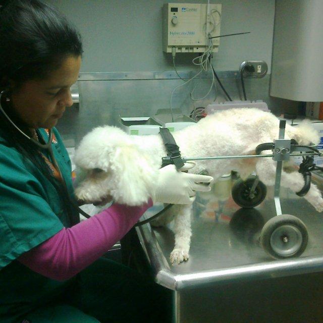 Assistenza sanitaria per cani e gatti: quando e quanto costa