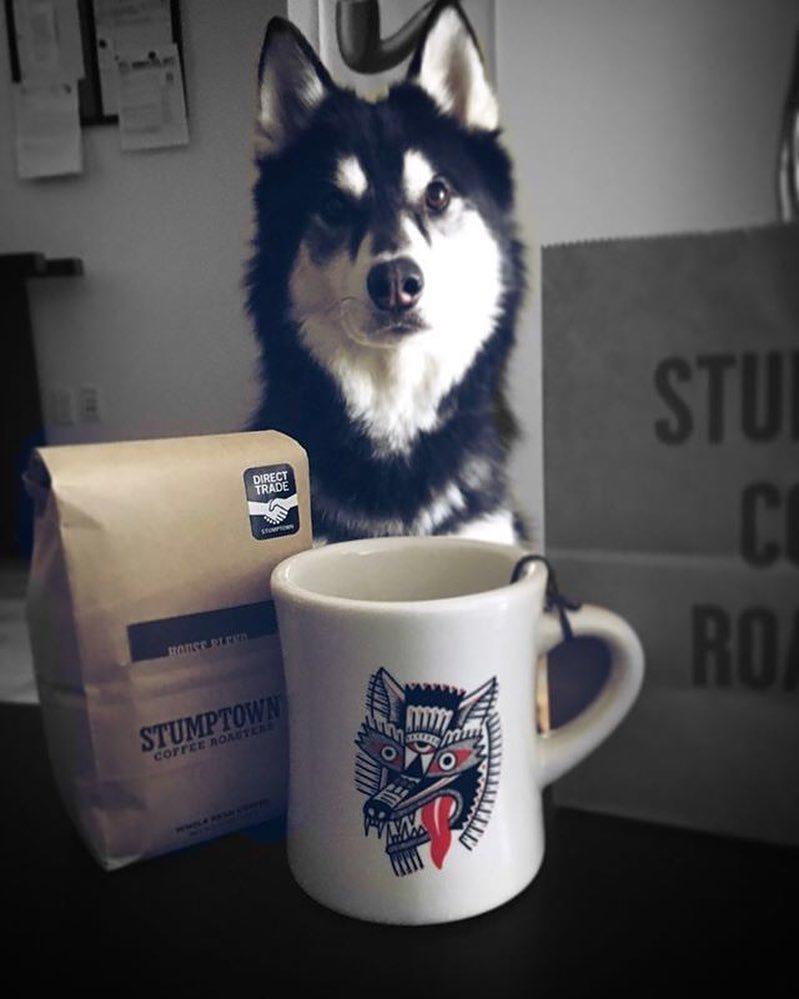 Stumptown Cup
