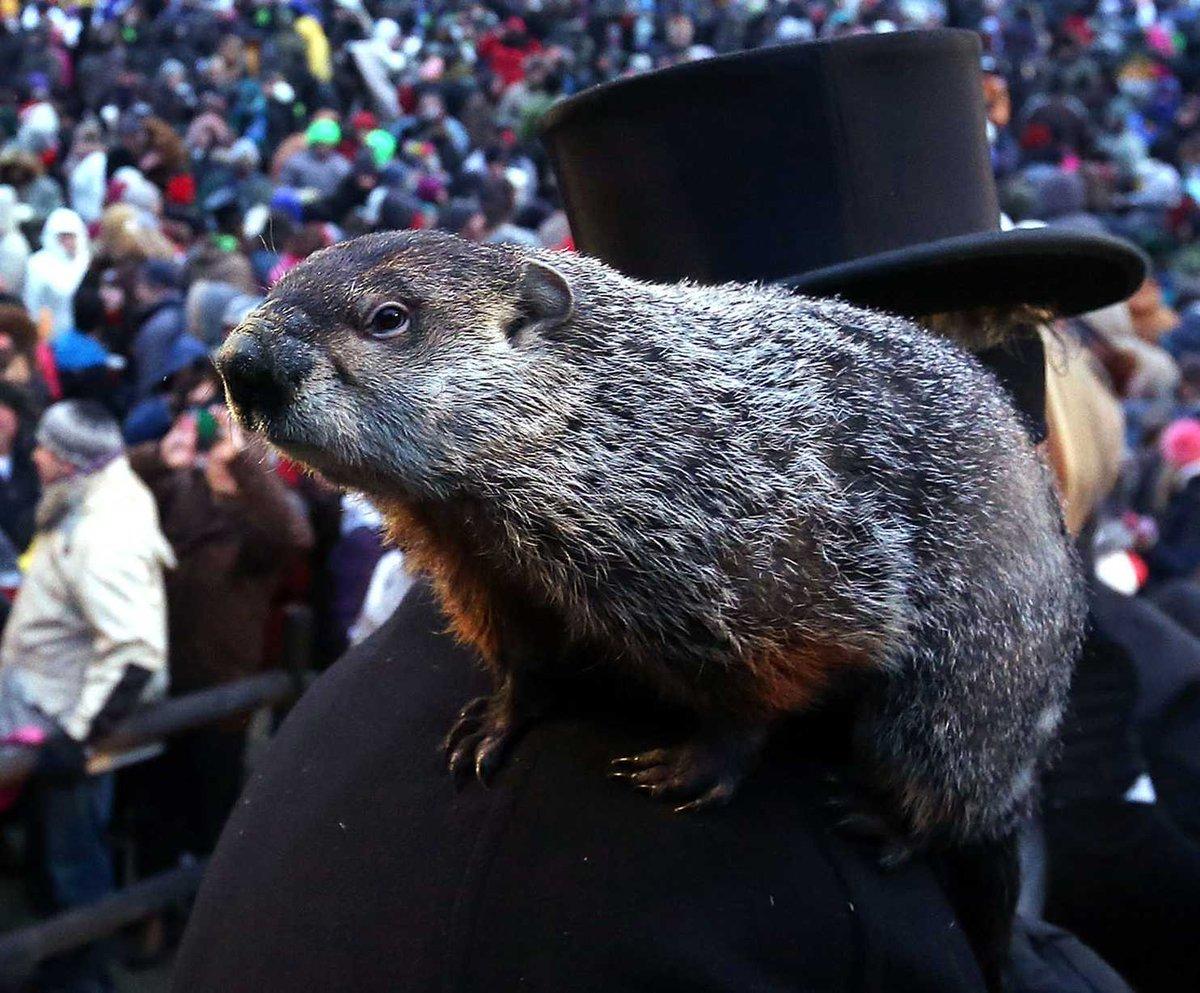 groundhog day punxsutawney phil saw his shadow jessicasimeoneverified account jessicasimeone middot feb 2