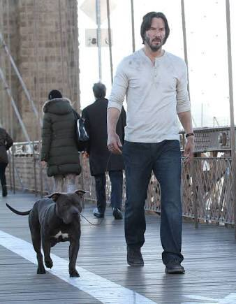 ジョン・ウィック2の今回犬殺される心配はねえな感は異常。