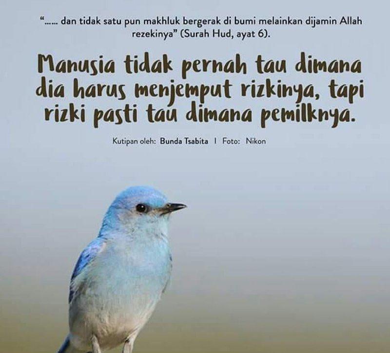 Dany A Twitter Bismillah 21day 03022017 Qs Hud Ayat 6