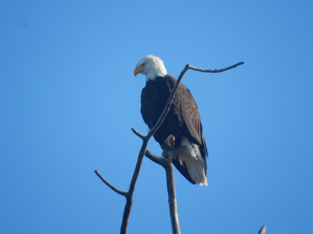 Nws Seattle On Twitter Sandpoint Baldeagle Saw His Shadow This
