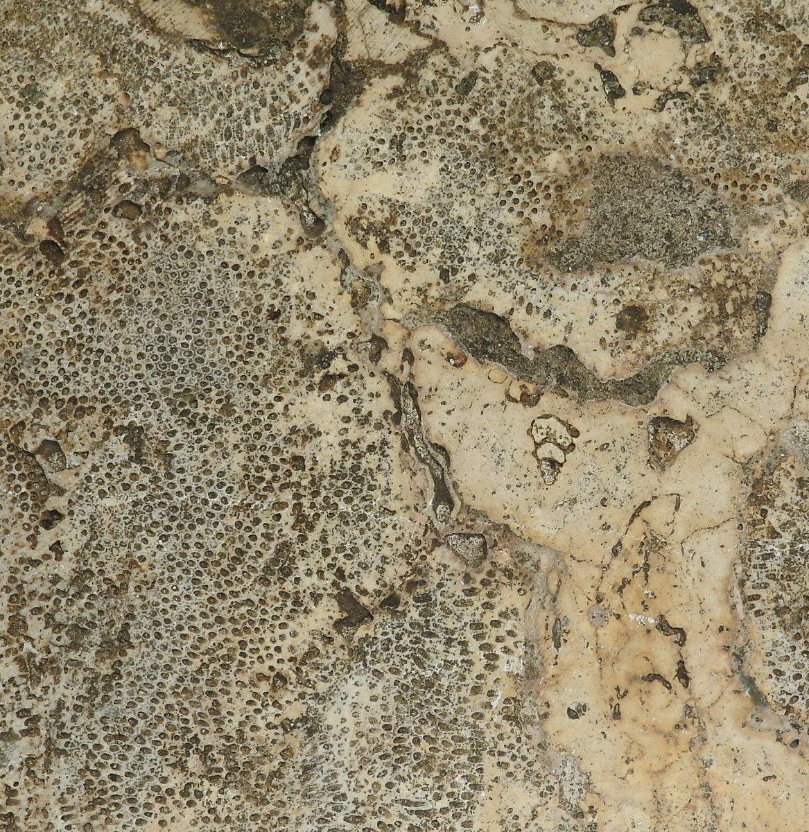 "steven stokowski, pg on twitter: ""various corals, bryozoans"