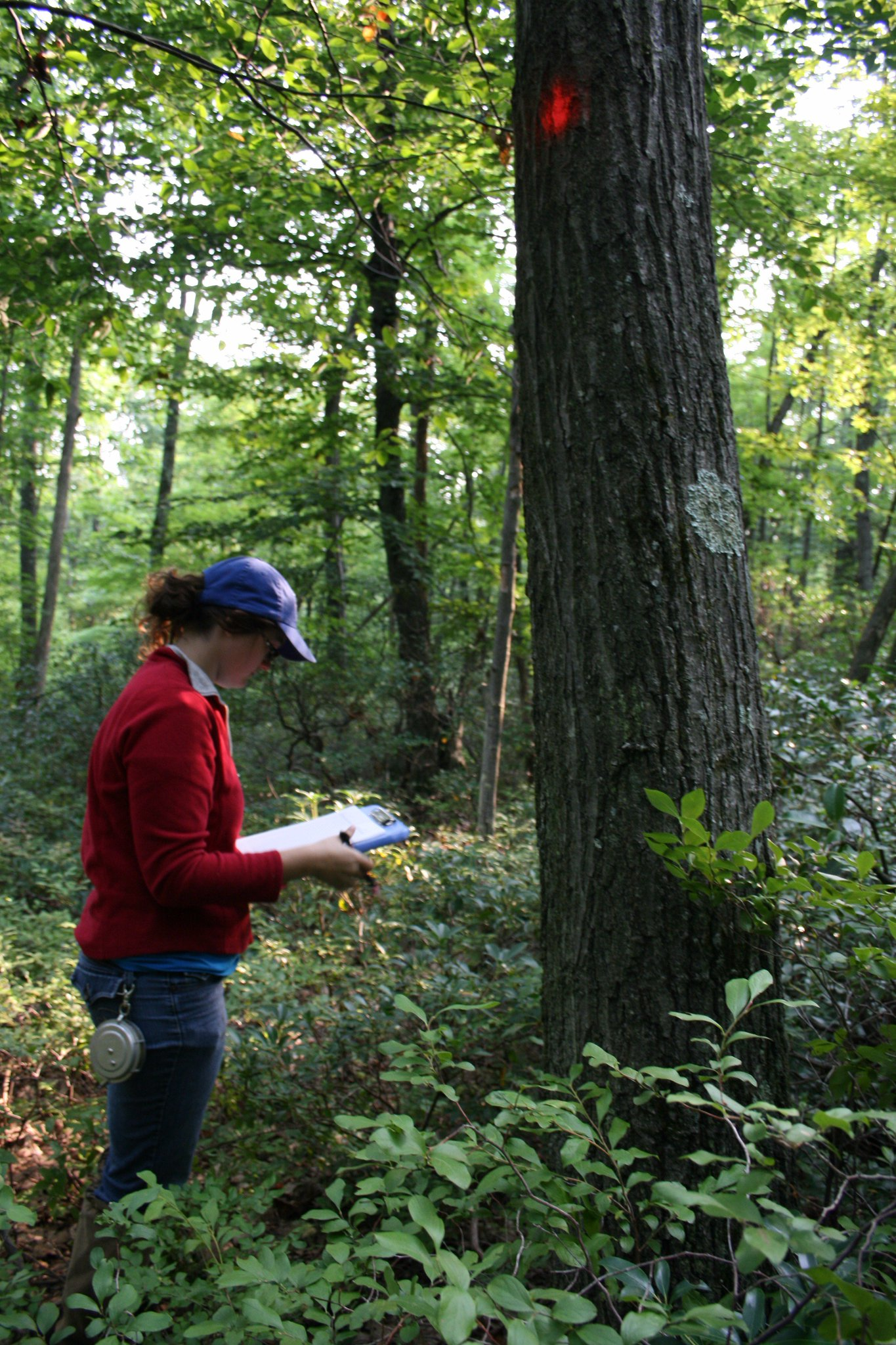 Hi, my name's Danielle and I study how forest understory plant communities respond to deer browsing and soil chem. #actuallivingscientist https://t.co/UQshZe0EZI