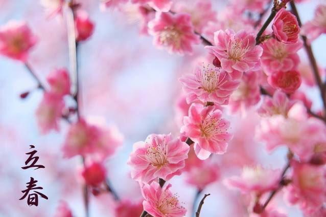 本日2月4日は立春(りっしゅん)、二十四節気のひとつです。  「陽気地中に萌し東風氷を解く」と御祭神…
