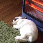 ウサギが焦げたー!ストーブの近くは動物も要注意!