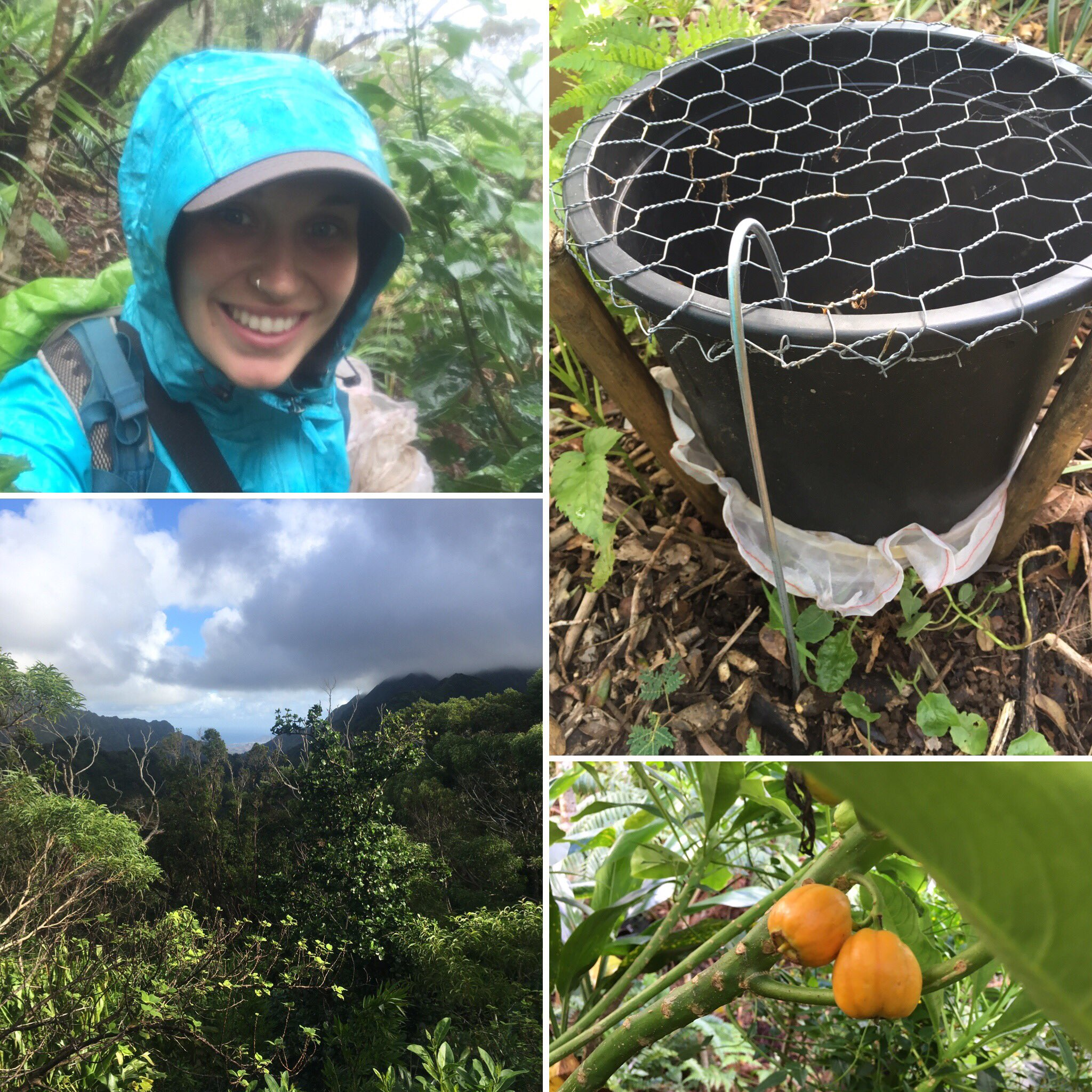 Hi! I'm Amy & I study how the extinction of native fruit-eating affects forest regeneration. #actuallivingscientist #ecology #becurious https://t.co/kyM0qG0I9H