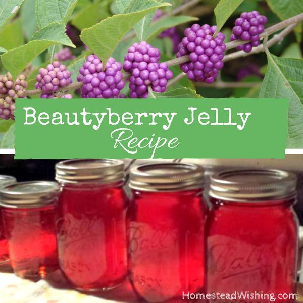 BeautyBerry Jelly Recipe