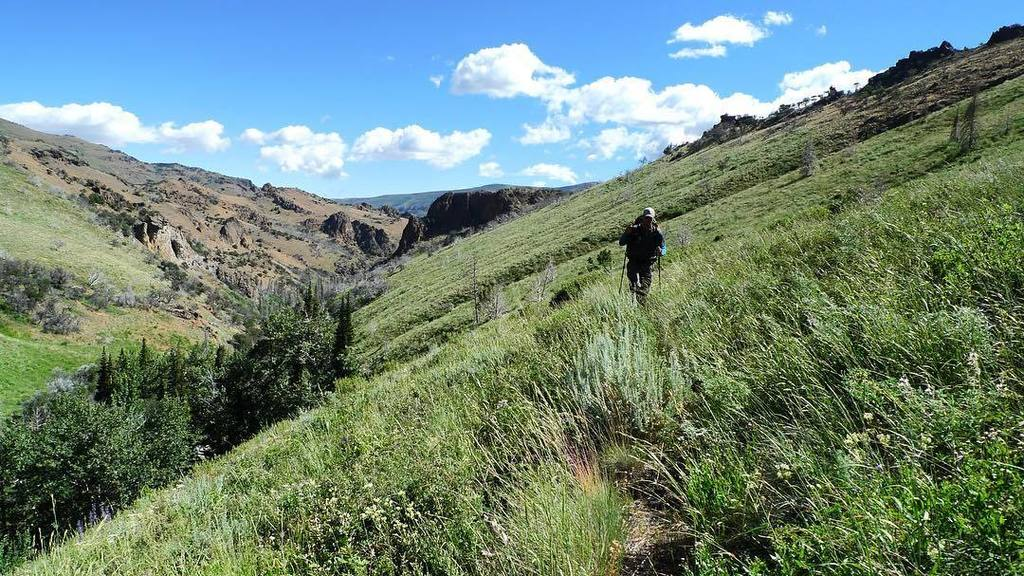 jarbidge cougar women Please find listed in what follows eighty-one statistical data about the county of owyhee compared  total women -owned firms of 100  spring - cougar spring.