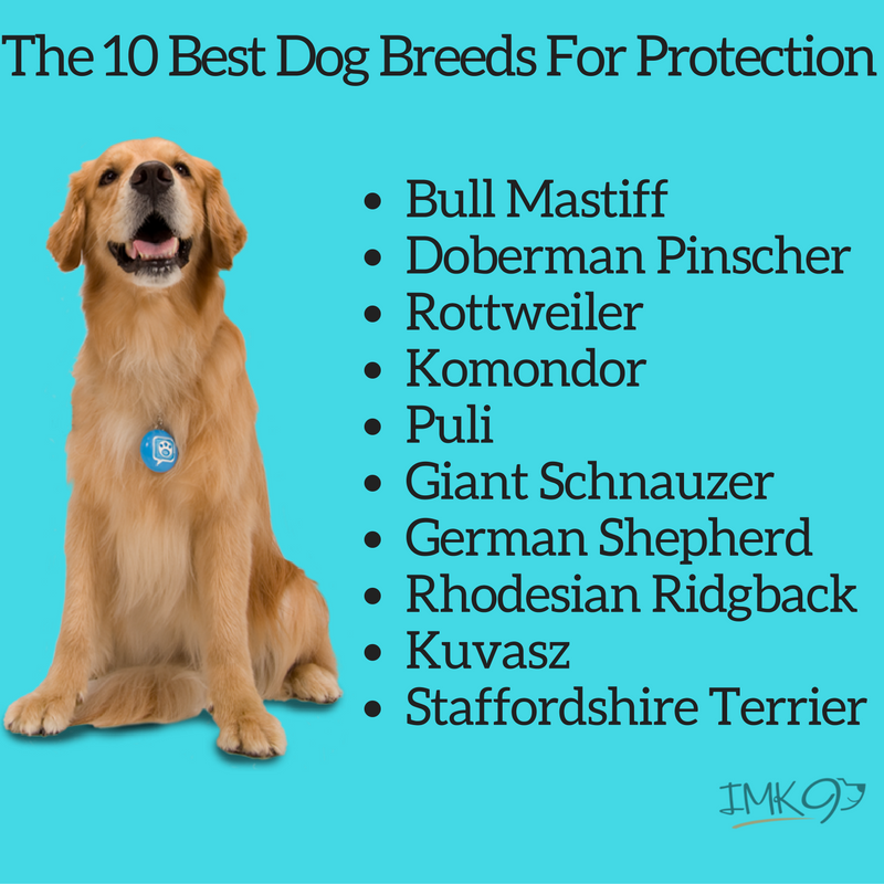 What do you think are the best dogs for home security?  #doglovers #pamperedpooch #petscorner #poshpamperedpets #dog<br>http://pic.twitter.com/rJLdxLr8sW