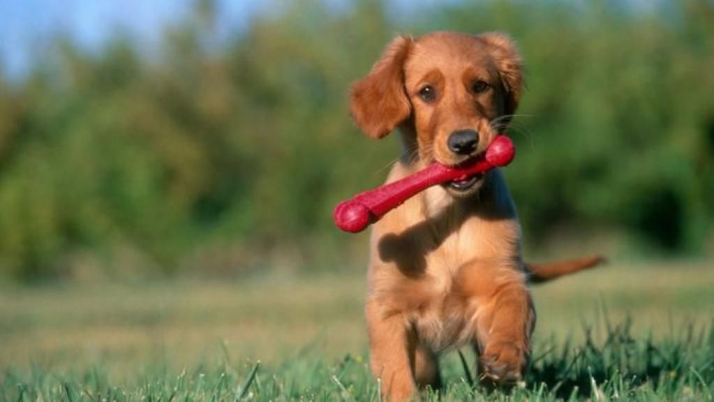 #Puppy Talk: why do we use it and do dogs respond? by @hbriggs #dogbehavior #doglovers  http:// buff.ly/2lu1BkB  &nbsp;  <br>http://pic.twitter.com/7y6zwVuxos