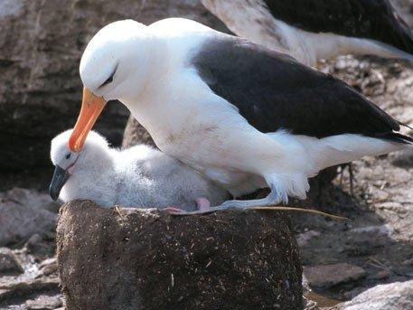 альбатрос птица фото с человеком