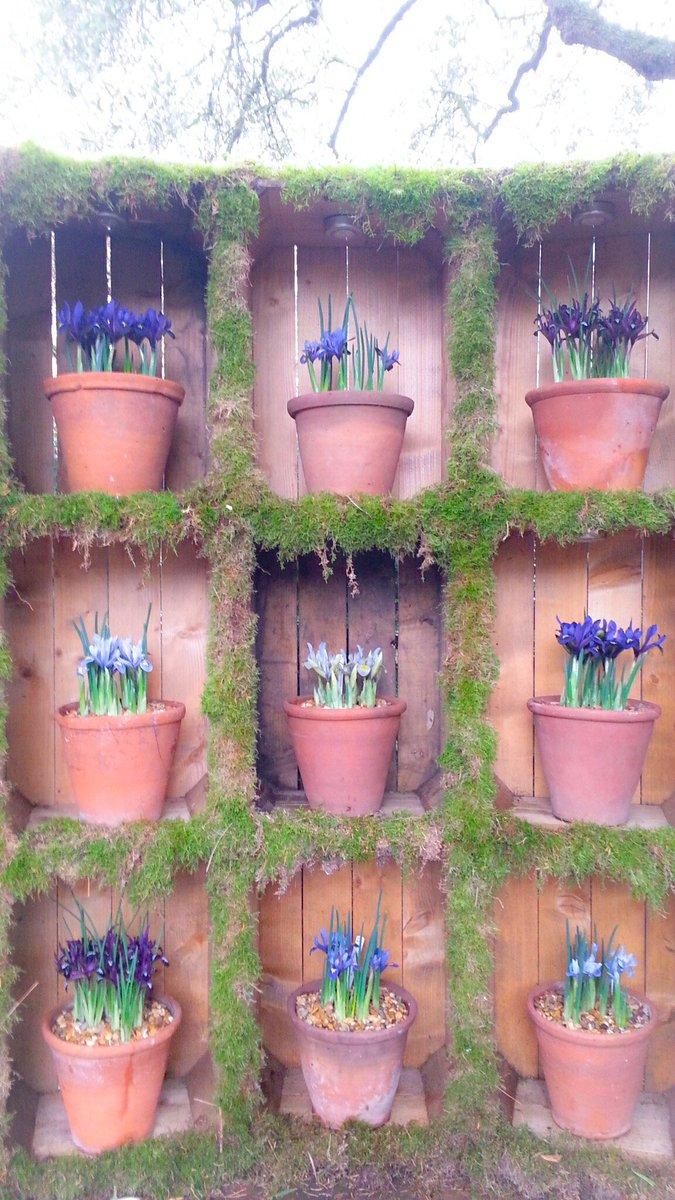 Irises on display at the Chelsea Physics garden #gardentags #iris #Lon...